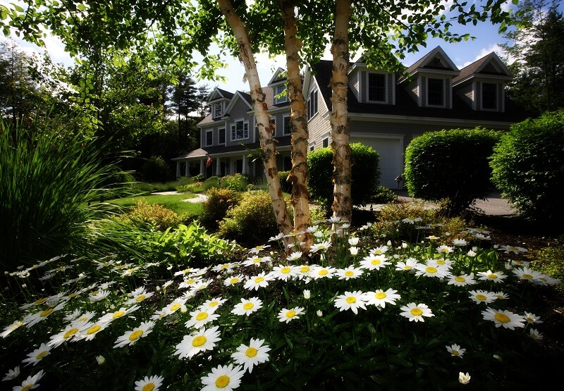 Landscaping Lessons Proper Placement Of Trees In Landscape Design